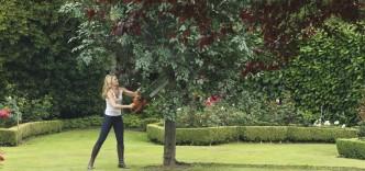 Beskæring af æbletræ, uden at beskadige kalus