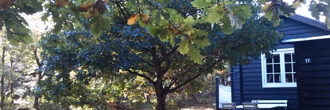 Oktober træer i flotte farver