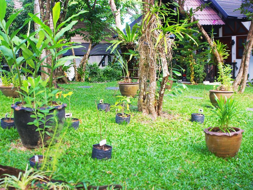 Projekt i Thailand