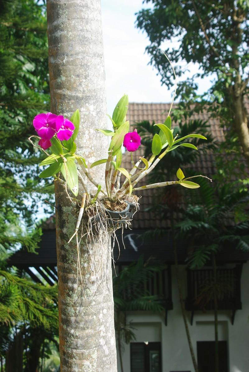 botanisk-4